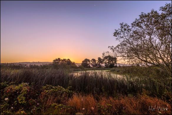 Arcata Marsh at Dawn